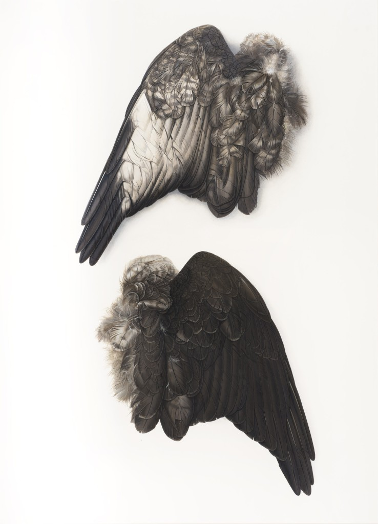 Buzzard's Wing  2010-13  Gouache on paper  71 x 51 cm