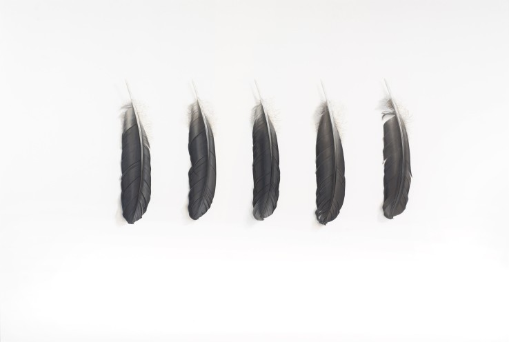 Five Grey Feathers (Heron)  2015  Gouache on paper  62 x 91 cm