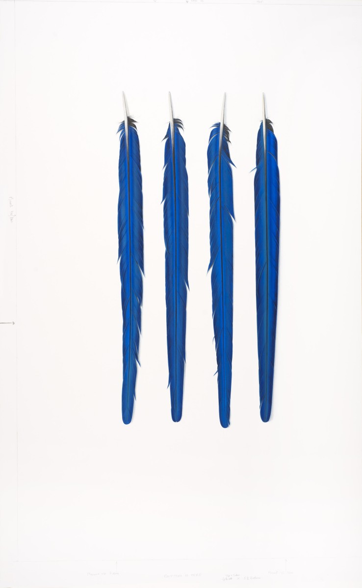 Four Blue Feathers  2018  Gouache on paper  95 x 57.5 cm