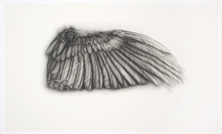 Grey Wing  2009  Conté, pencil, ink and gouache on paper  130 x 220 cm