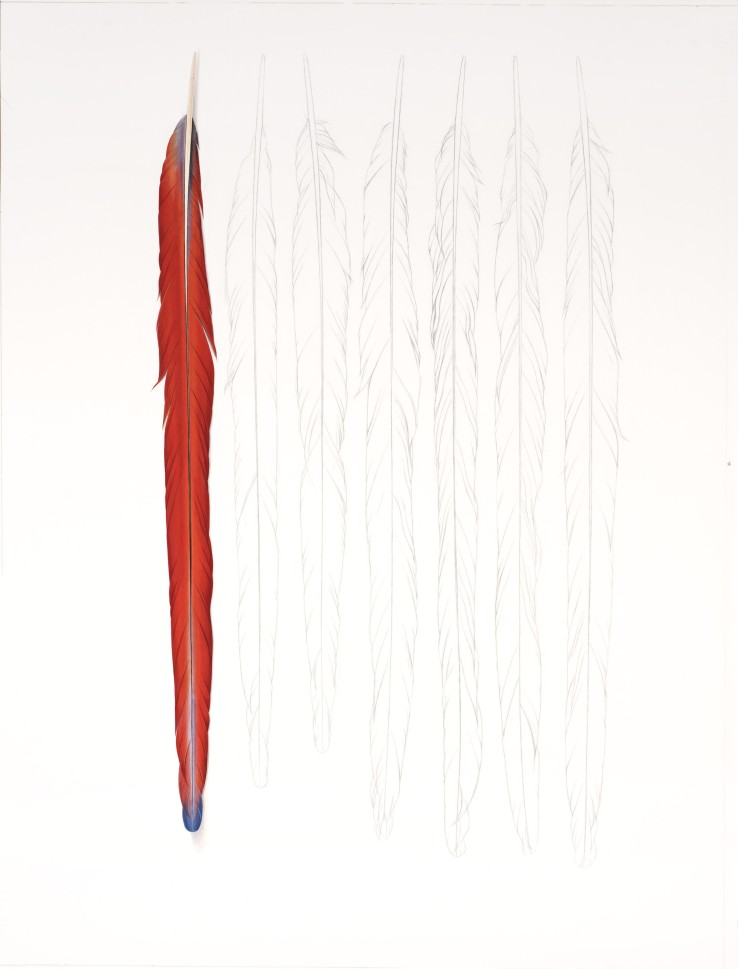 One Red Feather  2018  Gouache and pencil on paper  71 x 54.5 cm
