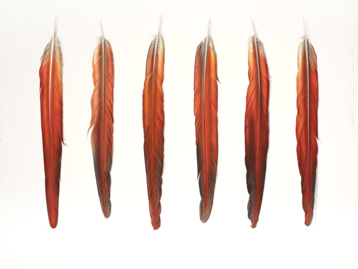 Six Red Feathers Underside  2014  Gouache on paper  53 x 70 cm