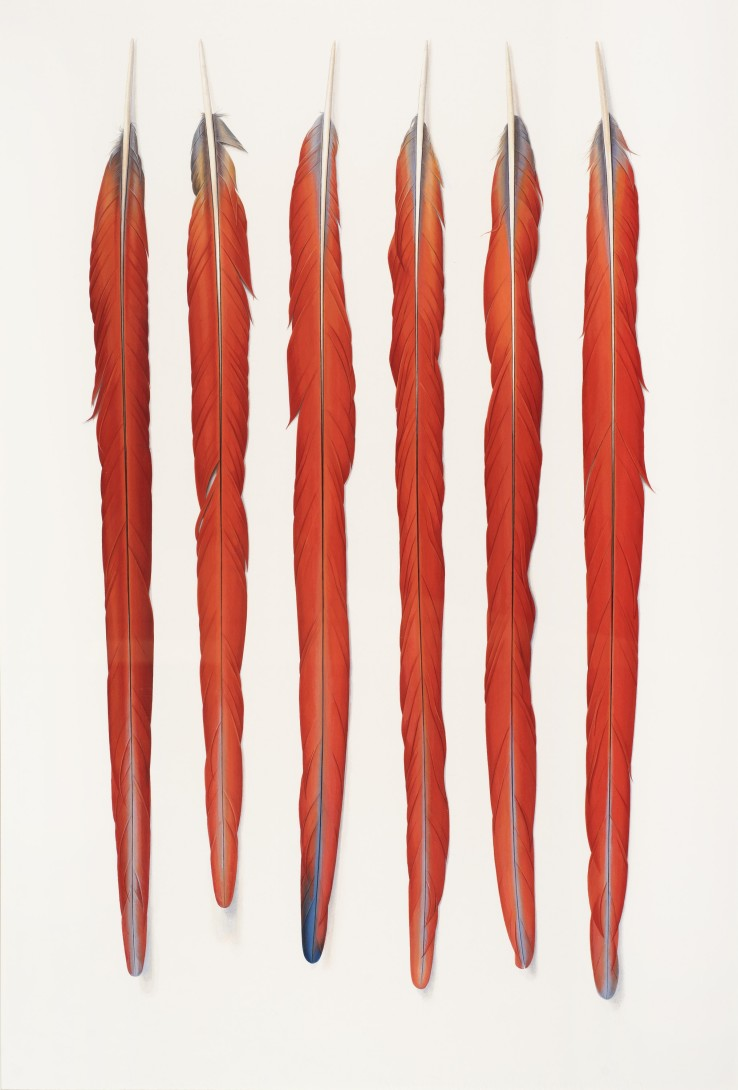 Six Red Feathers  2015  Gouache on paper  71 x 48 cm