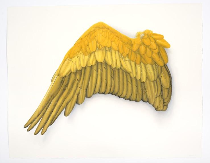 Yellow Wing  2015  Gouache on paper  109 x 86 cm