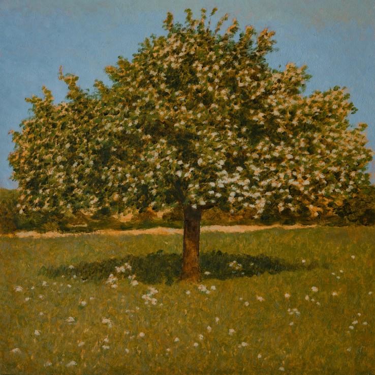 Apple Tree, 2018  Oil on board  35.5 x 35.5 cm