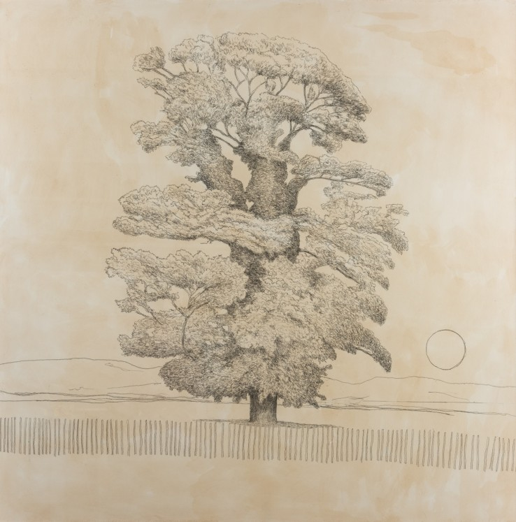 Sycamore Tree, 2019  Pencil on paper  122 x 122 cm