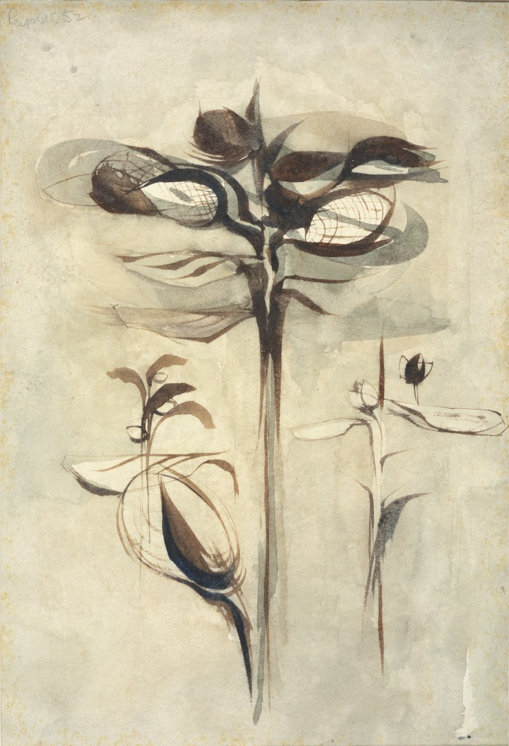 Alan Reynolds  Study of a Plant III, 1952  Pen and ink and wash on paper  27 x 18 cm  Signed and dated upper left recto