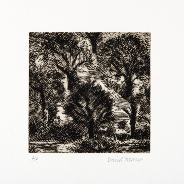 David Inshaw  Trees, 2010  Copper plate etching  12 x 12 cm  AP  Signed