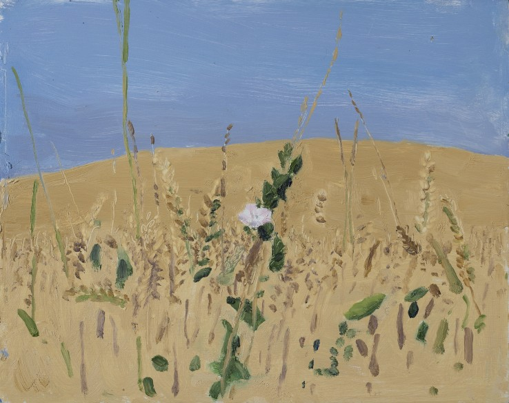 Danny Markey  Cornfield and Flower  Oil on board  23.4 x 29.5 cm  Signed and dated verso