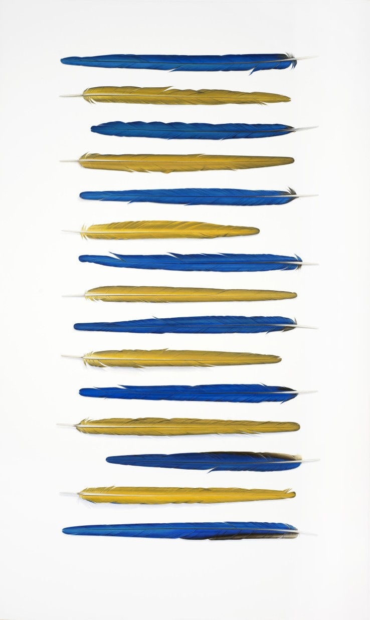 Blue and Yellow Feathers  2018  Gouache on paper  146 x 89 cm