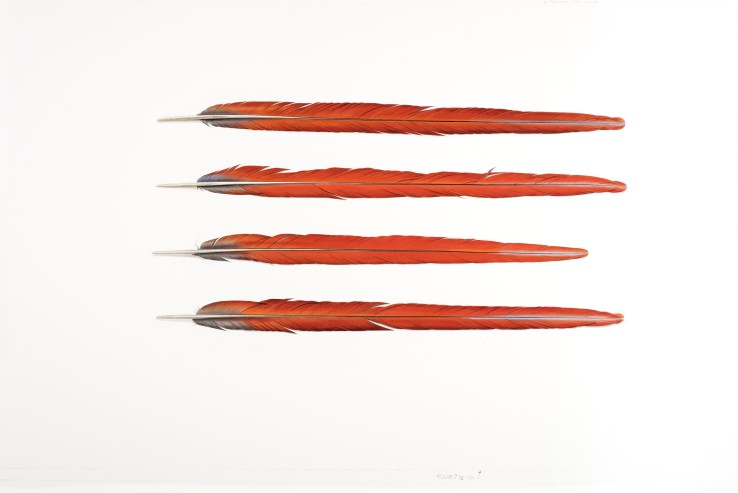 Four Red Feathers  2017  Gouache on paper  58 x 93 cm