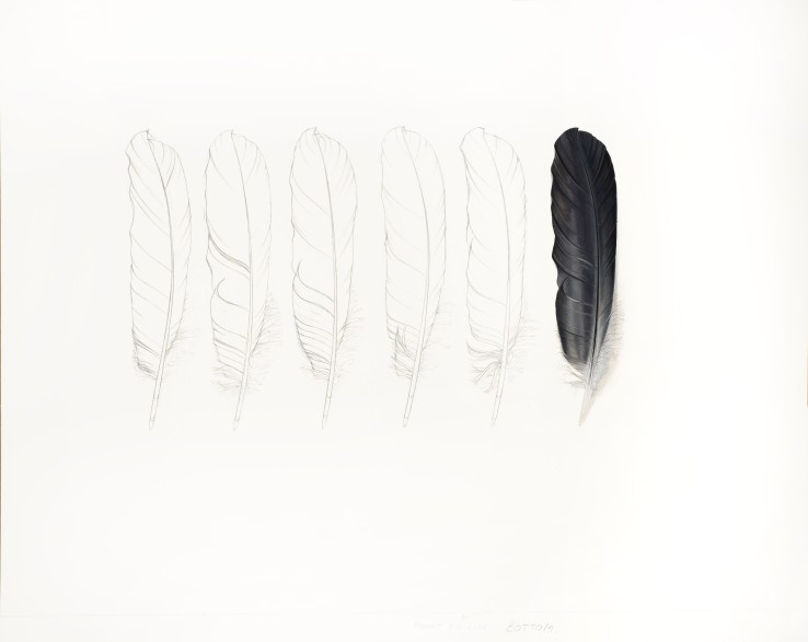 One Grey Feather and Five Pencil Feathers  2014  Gouache and pencil on paper  44.5 x 58 cm