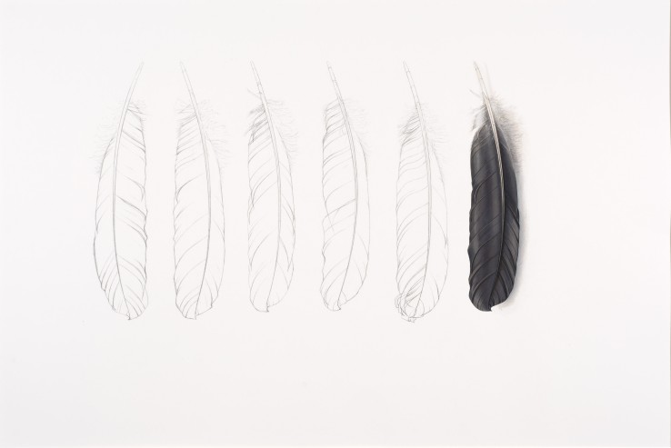 One Grey Feather  2014  Gouache and pencil on paper  45.5 x 69 cm