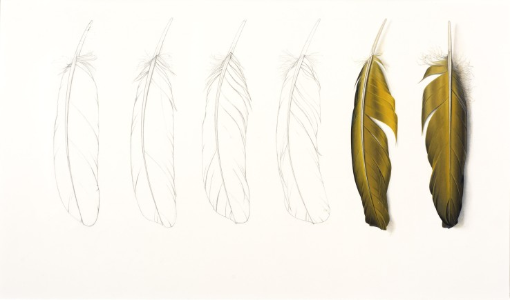 Two Yellow Feathers and Pencil Drawing  2016  Gouache and pencil on paper  30 x 30.5 cm