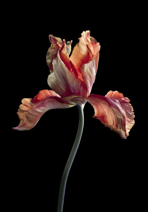 Carla van de Puttelaar Hortus Nocturnum photography 30 30/10 x 21 3/10 in 77 x 54 cm