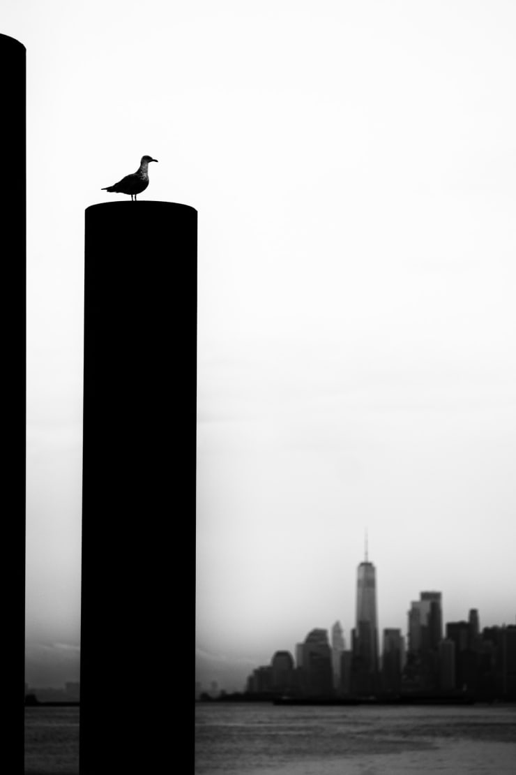 PHIL PENMAN, Brooklyn Bird, New York, 2019
