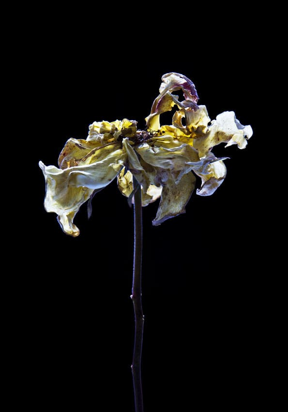 Carla van de Puttelaar  Hortus Nocturnum  Pigment print, mounted on dibond, black wooden frame and art glass  30 3/10 × 21 3/10 in  77 × 54 cm