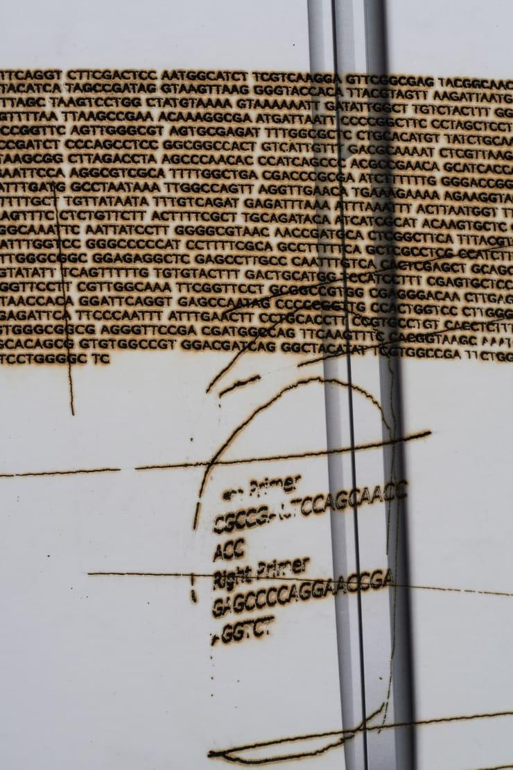 Tomasz Kobialka Drosophilia Melanogaster, 2018 Laser etch on cardboard 50 x 30 x 15 cm