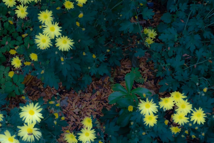 Rob Ventura, Untitled #1 (Botanical Photo), 2019