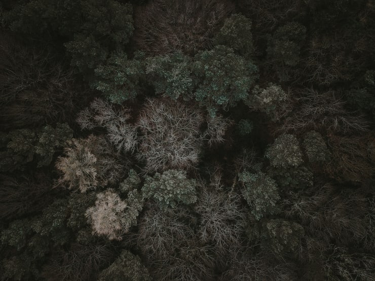 Katrina Forrest, Untitled, 2013