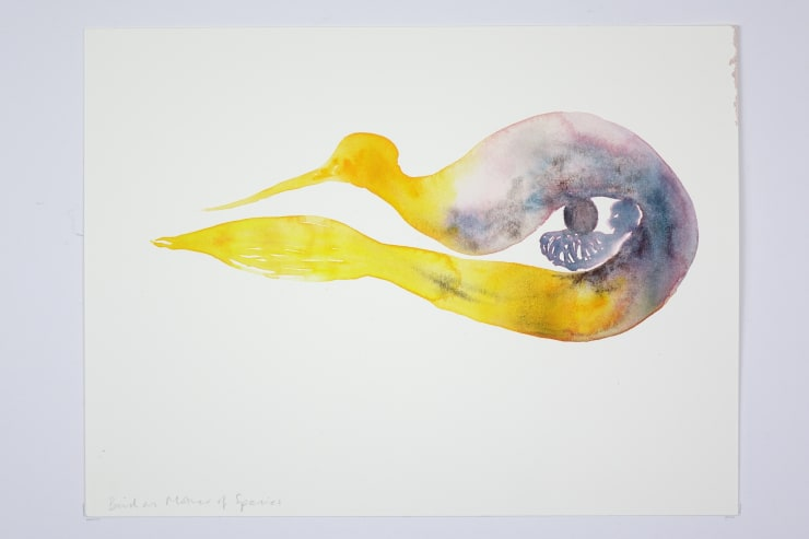 Kate Walters, Bird as mother of Species, 2018, watercolour, 23 x 31 cm