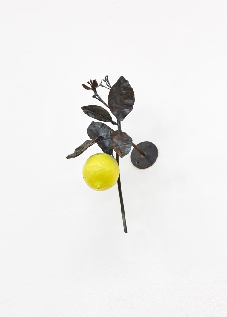 Rob Branigan, Citrus Limon (After J.T. Descourtilz), 2019