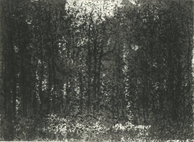 Norman Ackroyd Burnham Beeches, 2019