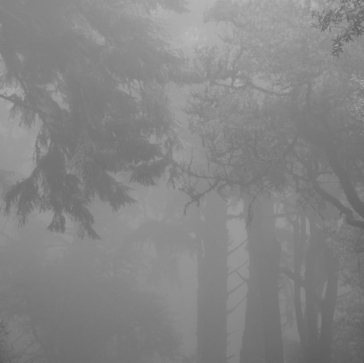 ", arial, helvetica; font-size: 11px; line-height: 14px;"">Miya Ando Foggy Forest - hwy 1, 2014"