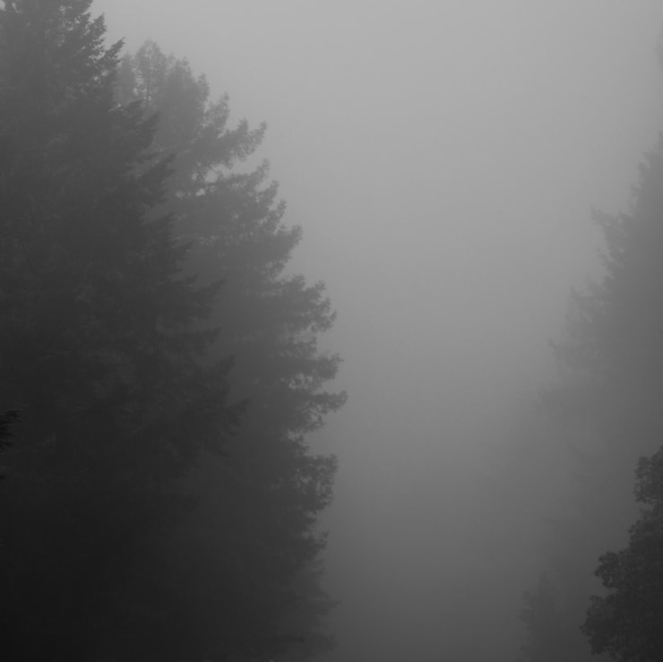 ", arial, helvetica; font-size: 11px; line-height: 14px;"">Miya Ando Foggy Redwoods Going Home, 2014"