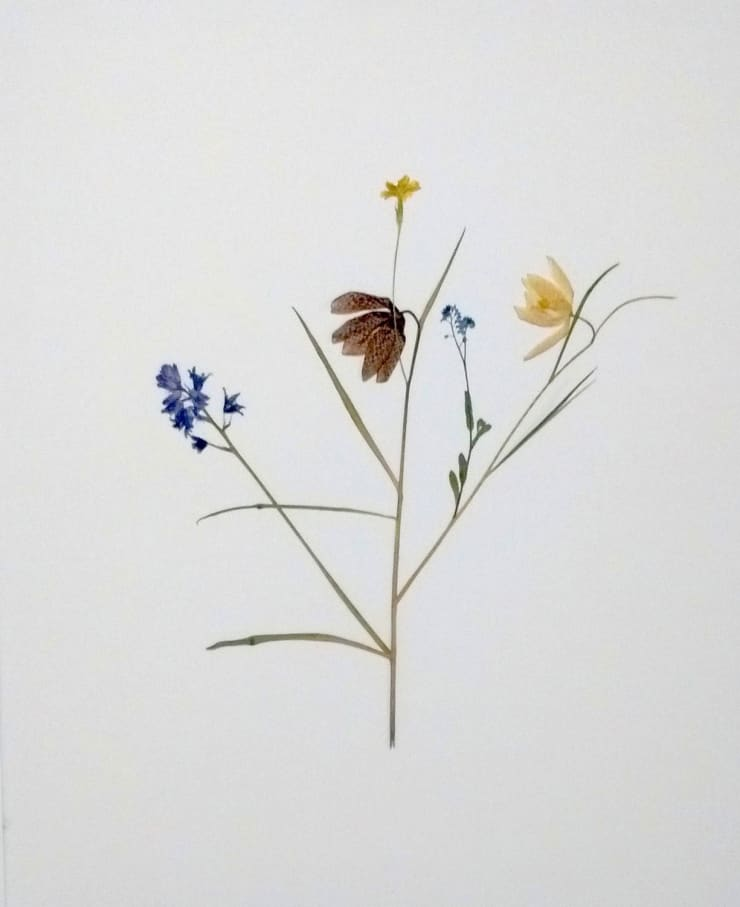 Marcus Coates, In what way can young people affect the circumstances that define them?, 2016 Pressed flowers on canvas