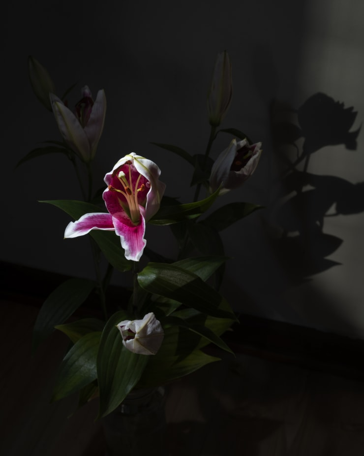 Res, Lily (Night) (2020). Courtesy of the artist and Zeit Contemporary Art, New York