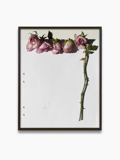 Res. Erik's Roses, 2020 Archival Pigment Print, 12 1/2 × 10 in (31.8 × 25.4 cm). Edition of 3 + 2 AP.