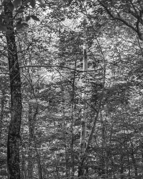 Bryson Rand. Untitled/Trees and Light (Skowhegan), 2019. Archival Injet print 40 x 32 in. (101.6 × 81.3 cm.) Edition of 3 + 2AP.