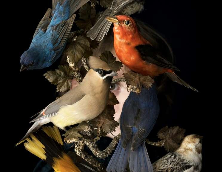 Cig Harvey - Birds of New England, Rockport, Maine