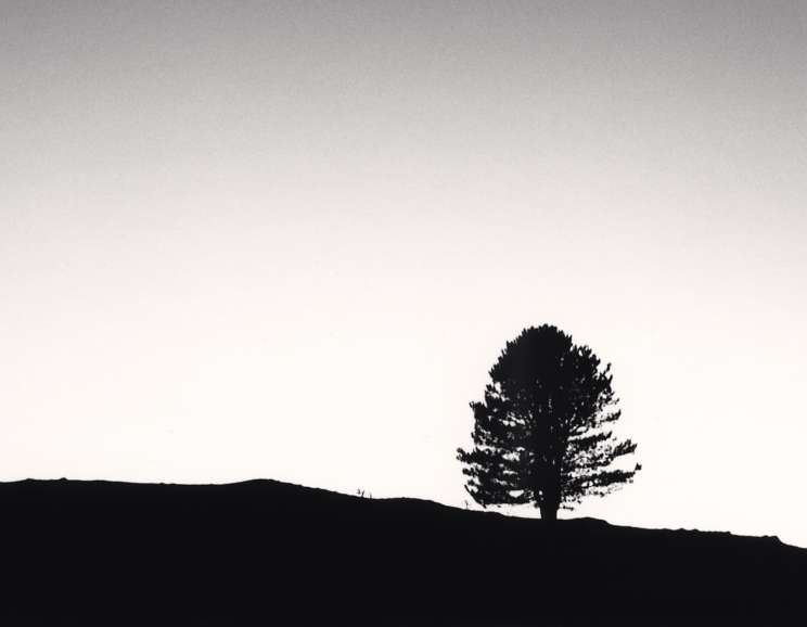 Michael Kenna - Black Pine at Night, Passo delle Capannelle, Pizzoli, Abruzzo, Italy