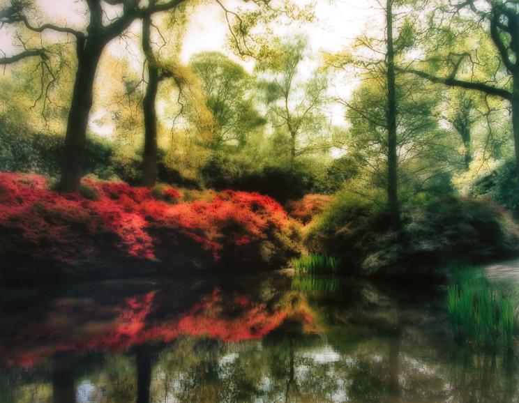 Lynn Geesaman - Isabella Plantation, England (4-09-23c-1)