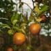 Roe Ethridge, Orange Grove # 8, 2004