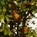 Roe Ethridge, Orange Grove #4, 2004