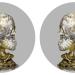 Male & female skulls