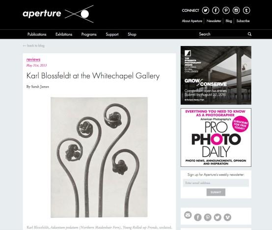 Karl Blossfeldt at the Whitechapel Gallery