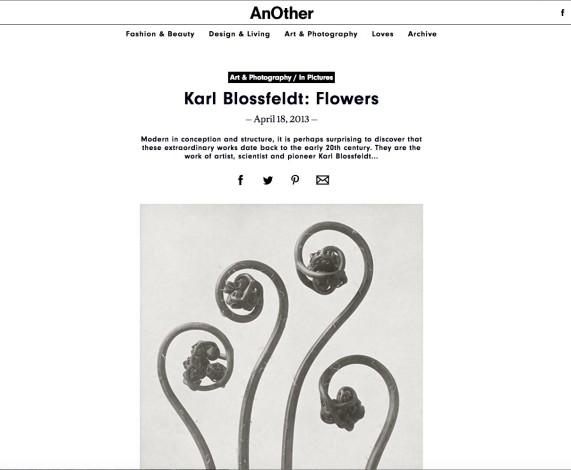 Karl Blossfeldt: Flowers