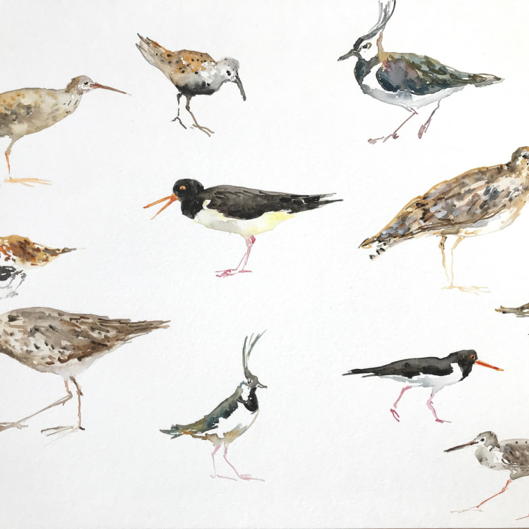 Fledge: A Year of Birds A mixed and multidisciplinary exhibition of artworks and words