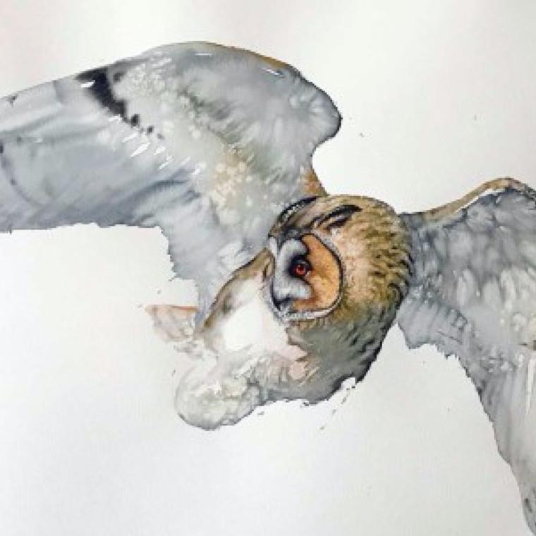 Karl Martens - Cricket Fine Art London Moments in Flight