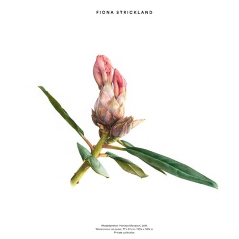 Gallery artist Fiona Strickland featured in 'Plant: Exploring the Botanical World'