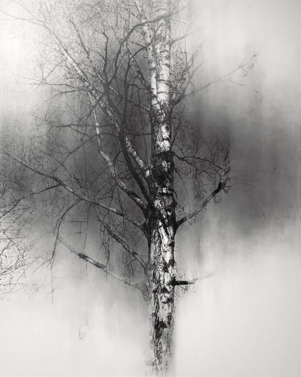 Yuichiro Sato, One Tree, 2021