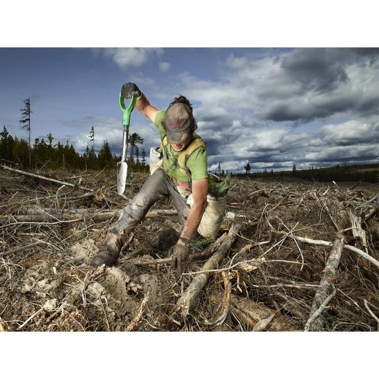 Rita Leistner | The Tree Planters