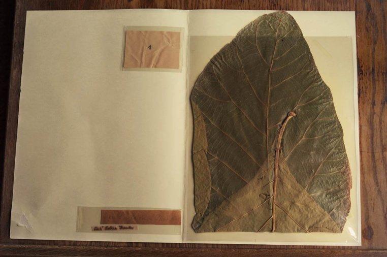 <em>John Muir Botanical Specimen, John Muir National Historic Site, Martonez, California</em>, 2011