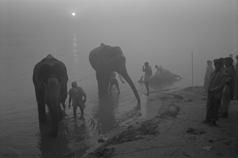 <span class=&#34;title&#34;>Elephant, Early Morning Bathing, India <span class=&#34;title_comma&#34;>, </span></span><span class=&#34;year&#34;>1984</span>