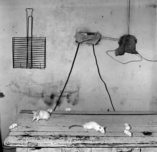 <em>Rats on Kitchen Table</em>, 1999