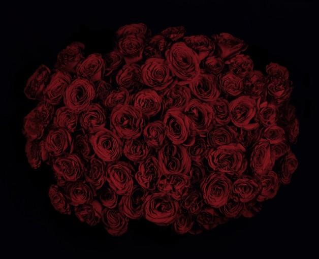 <em>Roses V</em>, 2009